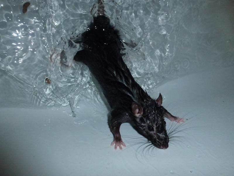 Les ratons de Niort ! P1030010