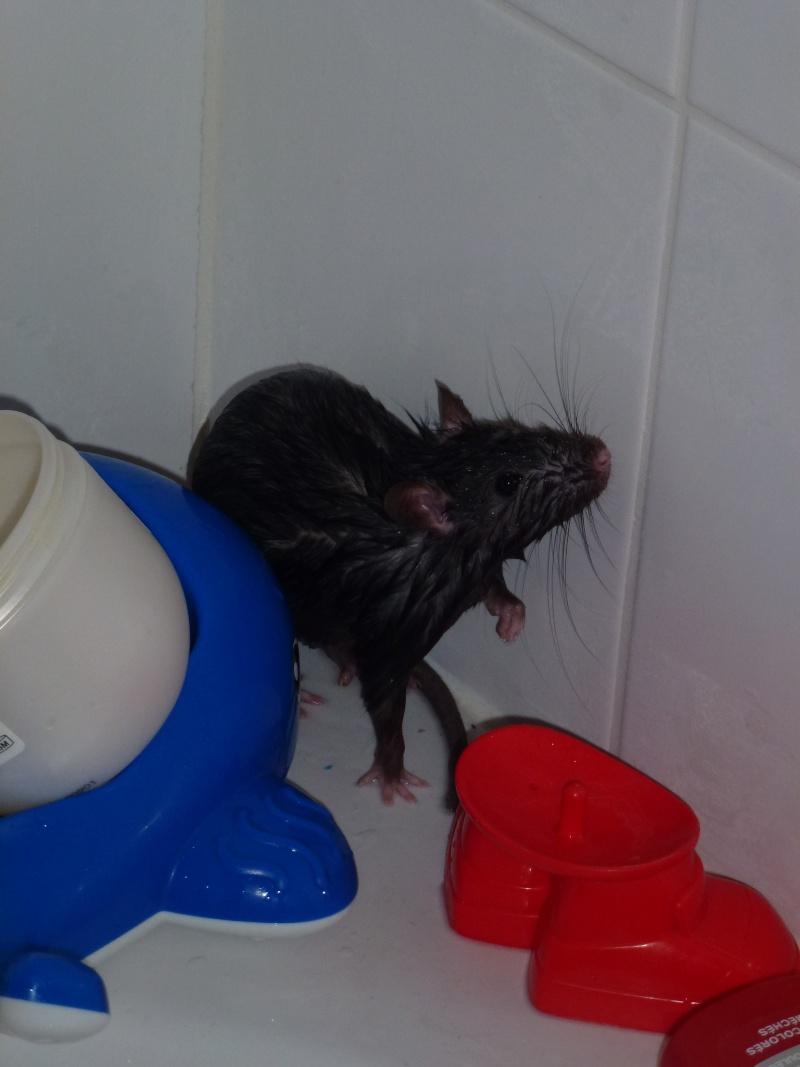Les ratons de Niort ! P1030011