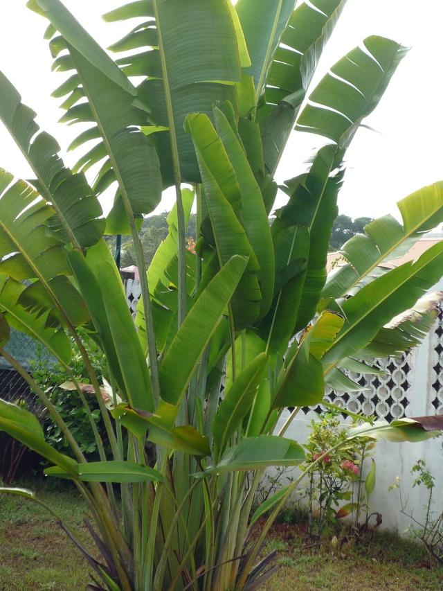 Outremer- découverte de la Guyane - Page 14 P1020026