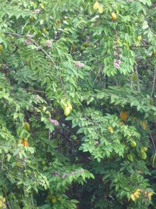 Outremer- découverte de la Guyane - Page 8 P1020426