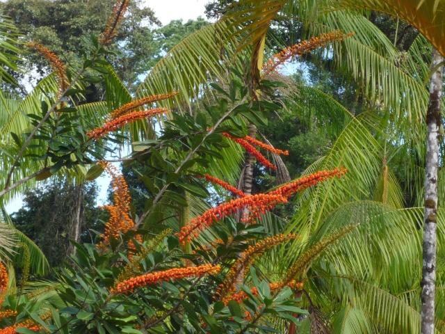 Outremer- découverte de la Guyane - Page 8 P1020431