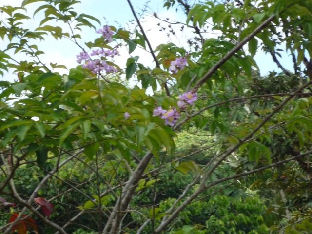 Outremer- découverte de la Guyane - Page 9 P1020443