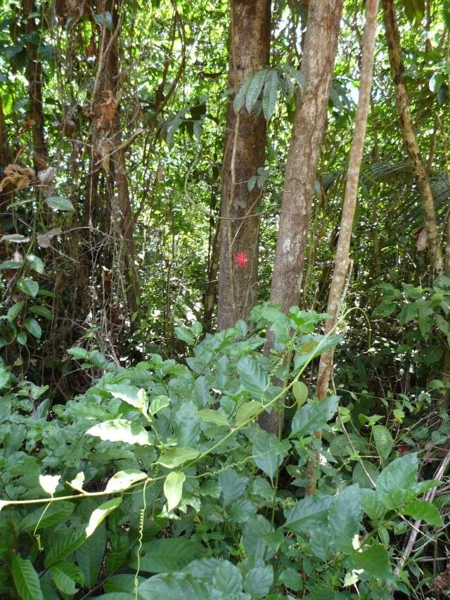 Outremer- découverte de la Guyane - Page 9 P1020451