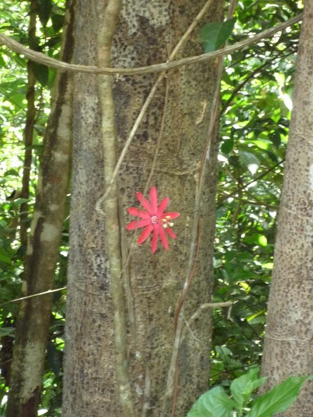 Outremer- découverte de la Guyane - Page 9 P1020452