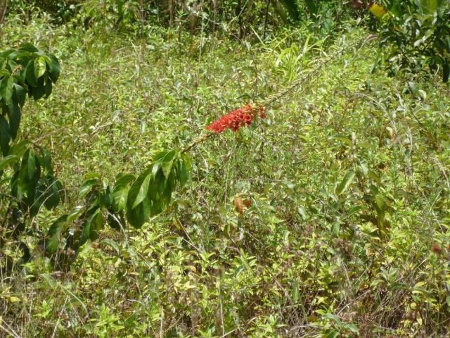 Outremer- découverte de la Guyane - Page 9 P1020458