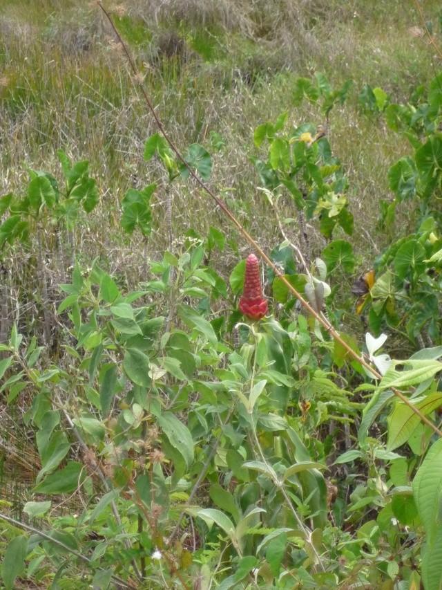 Outremer- découverte de la Guyane - Page 9 P1020460
