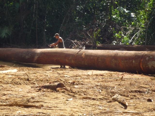 Outremer- découverte de la Guyane - Page 9 P1020474