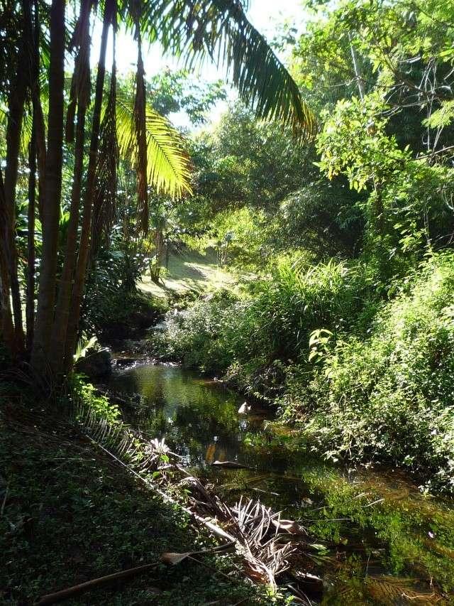 Outremer- découverte de la Guyane - Page 8 P1020511