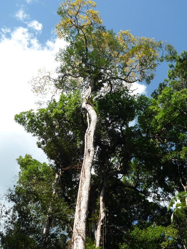 Outremer- découverte de la Guyane - Page 9 P1020515