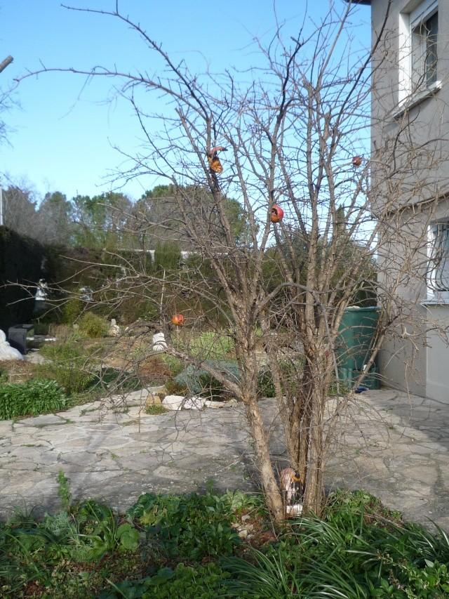 un arbre en hiver - résultats P1030018