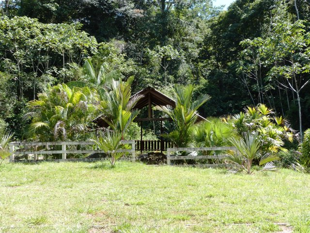 Outremer- découverte de la Guyane - Page 8 Zinna_12