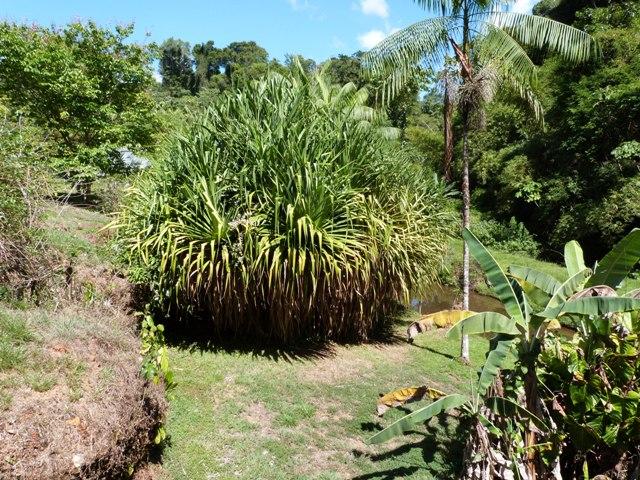 Outremer- découverte de la Guyane - Page 8 Zinna_15