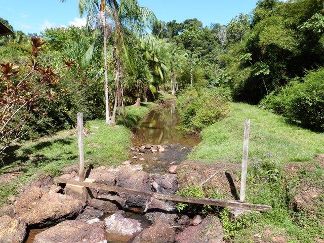 Outremer- découverte de la Guyane - Page 8 Zinna_16