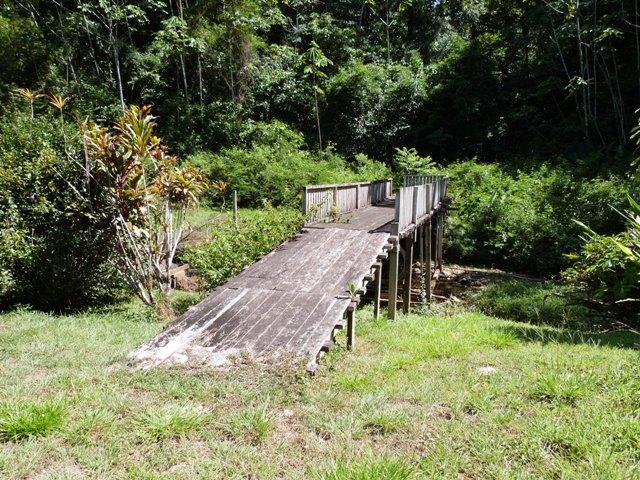 Outremer- découverte de la Guyane - Page 8 Zinna_19
