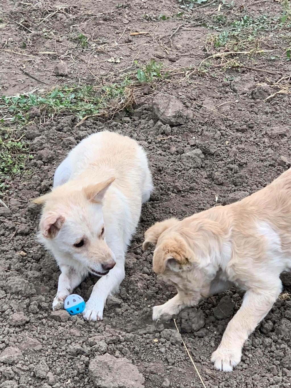 Timaya, née en 2019, Maman et ses 3 chiots attrapés au bord de la route - Parrainée par Jeena - EN GARDE EXTERIEURE-R-SC 24433610