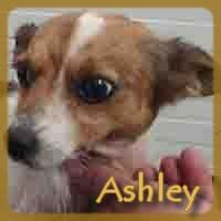 Affiche des chiens à l'adoption  A PARTAGER * IMPRIMER * DIFFUSER Asley10
