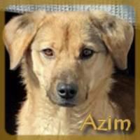 Affiche des chiens à l'adoption  A PARTAGER * IMPRIMER * DIFFUSER Azim10