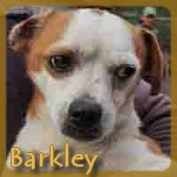 Affiche des chiens à l'adoption  A PARTAGER * IMPRIMER * DIFFUSER Barkle10