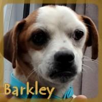 Affiche des chiens à l'adoption  A PARTAGER * IMPRIMER * DIFFUSER Barkle11