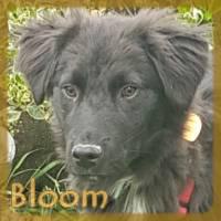 Affiche des chiens à l'adoption  A PARTAGER * IMPRIMER * DIFFUSER Bloom10