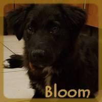 Affiche des chiens à l'adoption  A PARTAGER * IMPRIMER * DIFFUSER Bloom_10