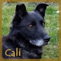 Affiche des chiens à l'adoption  A PARTAGER * IMPRIMER * DIFFUSER Cali_210