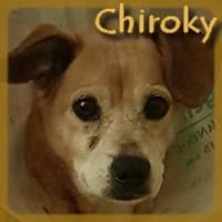 Affiche des chiens à l'adoption  A PARTAGER * IMPRIMER * DIFFUSER Chirok10