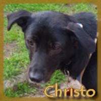 Affiche des chiens à l'adoption  A PARTAGER * IMPRIMER * DIFFUSER Christ10