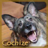 Affiche des chiens à l'adoption  A PARTAGER * IMPRIMER * DIFFUSER Cochiz10
