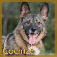 Affiche des chiens à l'adoption  A PARTAGER * IMPRIMER * DIFFUSER Cochiz11