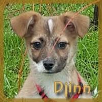 Affiche des chiens à l'adoption  A PARTAGER * IMPRIMER * DIFFUSER Djinn_10
