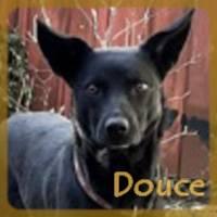 Affiche des chiens à l'adoption  A PARTAGER * IMPRIMER * DIFFUSER Douce10