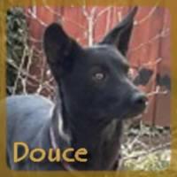 Affiche des chiens à l'adoption  A PARTAGER * IMPRIMER * DIFFUSER Douce_11