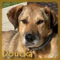 Affiche des chiens à l'adoption  A PARTAGER * IMPRIMER * DIFFUSER Doucka12