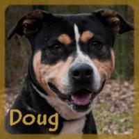 Affiche des chiens à l'adoption  A PARTAGER * IMPRIMER * DIFFUSER Doug_v10