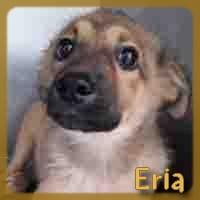 Affiche des chiens à l'adoption  A PARTAGER * IMPRIMER * DIFFUSER Eria10