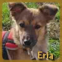 Affiche des chiens à l'adoption  A PARTAGER * IMPRIMER * DIFFUSER Eria_210
