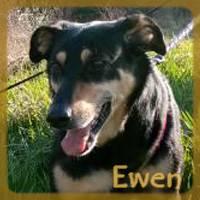 Affiche des chiens à l'adoption  A PARTAGER * IMPRIMER * DIFFUSER Ewen1_10