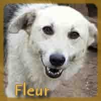 Affiche des chiens à l'adoption  A PARTAGER * IMPRIMER * DIFFUSER Fleur110
