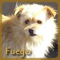 Affiche des chiens à l'adoption  A PARTAGER * IMPRIMER * DIFFUSER Fuego10