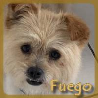 Affiche des chiens à l'adoption  A PARTAGER * IMPRIMER * DIFFUSER Fuego11