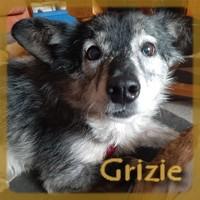 Affiche des chiens à l'adoption  A PARTAGER * IMPRIMER * DIFFUSER Grizie10