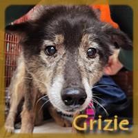 Affiche des chiens à l'adoption  A PARTAGER * IMPRIMER * DIFFUSER Grizzi10