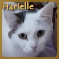 Affiche des chiens à l'adoption  A PARTAGER * IMPRIMER * DIFFUSER Hariel11