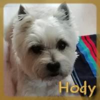 Affiche des chiens à l'adoption  A PARTAGER * IMPRIMER * DIFFUSER Hody10