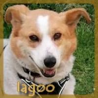 Affiche des chiens à l'adoption  A PARTAGER * IMPRIMER * DIFFUSER Iagoo10