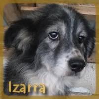 Affiche des chiens à l'adoption  A PARTAGER * IMPRIMER * DIFFUSER Izarra10