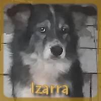 Affiche des chiens à l'adoption  A PARTAGER * IMPRIMER * DIFFUSER Izarra11