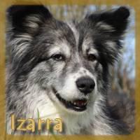 Affiche des chiens à l'adoption  A PARTAGER * IMPRIMER * DIFFUSER Izarra12