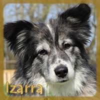 Affiche des chiens à l'adoption  A PARTAGER * IMPRIMER * DIFFUSER Izarra13